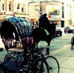 """Toronto Police,""  ""Mounted Unit"" ""La Palette Protest,  horse,  horsemeat"