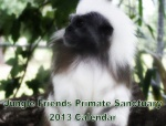 Jungle Friends 2013 Fundraising Calendar