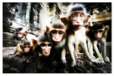 Monkey group in a naturalistic environment