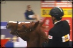 2012 Modern Pentathlon - rider refuses to give the horse his head