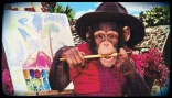 chimp-painter