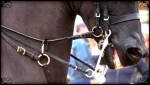 Why run both sets of reins through the martingale?