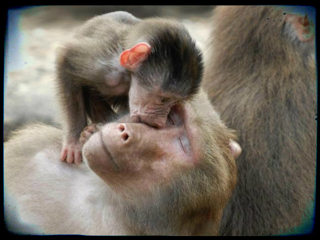 monkey mom love