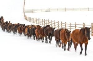 Hutul-horses-05