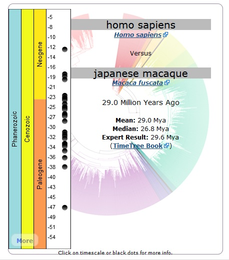 The point of divergence from the most recent common ancestor of Homo Sapiens (us) and Japanese Macaques occurred approximately 29 mya (million years ago) Courtesy of Timetree.org