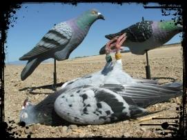 pigeonsdeadbird