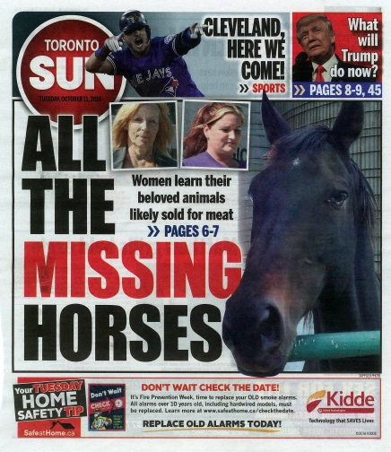 all-the-missing-horses