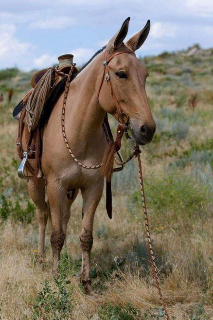 mule-day